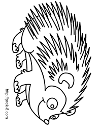 raccoon coloring ngbasic