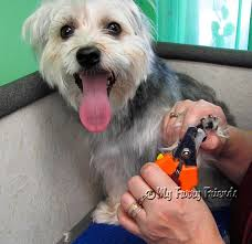 grooming your furry friend why does it cost so much have my