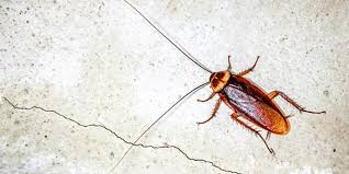 Baby Roaches In Bathroom How Cockroaches Can Make You Sick Allergyandair Com
