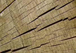 free cut tree trunk texture