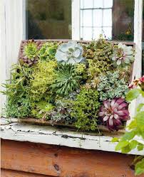 286 best small succulent gardens u0026 container gardens images on