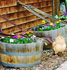 Backyard Chicken Farming by Lessons I U0027ve Learned After Five Years Of Chicken Raising