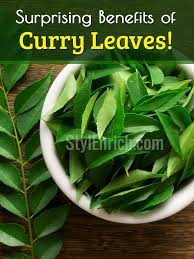 Curry Leaf Plant Diseases - curry leaves benefits eat curry leaves regularly for hair skin