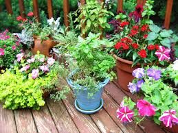 Herb Container Garden The Mysterious Garden Muse Fragrant Herbs For Container And Garden