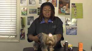 how to brush a dog u0027s teeth with baking soda and peroxide youtube