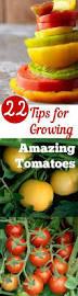 25 trending tomato garden ideas on pinterest growing tomatoes