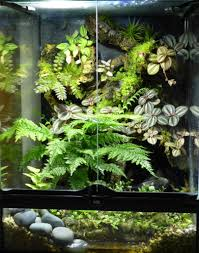makeovers and cool decoration for modern homes terrarium plants