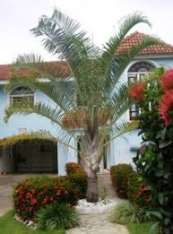 all types of palm trees