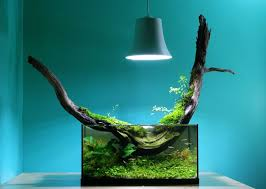 Aquascape Fish Best 25 Petit Aquarium Ideas On Pinterest Aquarium Nano