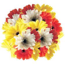 Gerbera Daisies Buy Bulk Mini Gerbera Daisies Gerbera Daisy Wedding Bouquet