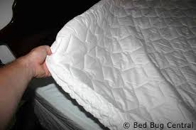 Bed Bug Pictures Of Mattresses Bed Bugs 101 Mattress And Box Spring Encasements Bedbug Central
