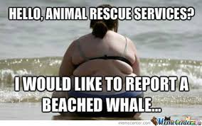 Whaling Meme - funny beached whale images the largest whale in the world