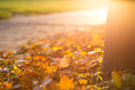 fall autumn leaves on the ground free stock photo download picjumbo