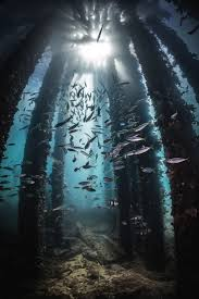 996 best underwater images on pinterest water ocean life and