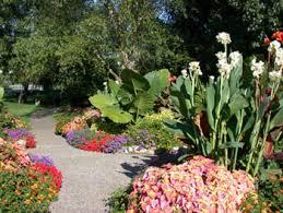 Tropical Plants Pictures - tropical plants in the landscape extension