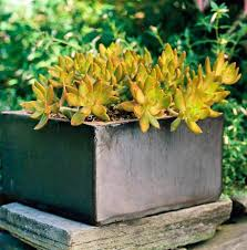 Succulent Gardens Ideas So Easy Succulent Container Gardens Midwest Living
