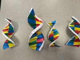 Dna Model Origami - science origami the beech academy
