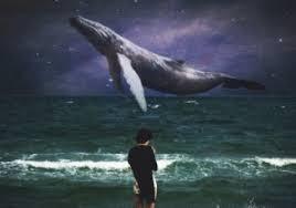 Whale Meme - create meme the blue whale the blue whale memes blue whale