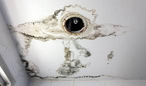 moisissure mur chambre combattre les moisissures dans votre habitat