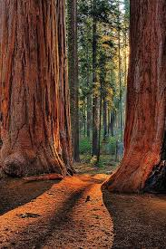most beautiful parks in the us 62 best images about i am from america on pinterest