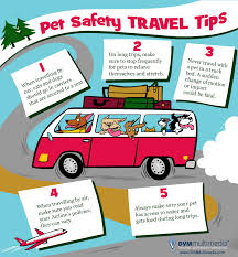 travel safety tips images Pet travel safety tips river bank veterinary clinic jpg