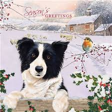 border collie robin charity cards pack of 10 farm