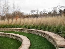 11 best front yard ideas images on ornamental grasses