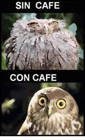 Cafe Meme - sin cafe con cafe meme on me me