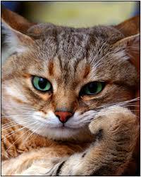 Thinking Cat Meme - create meme thinking cat pictures meme arsenal com
