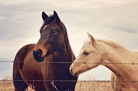 horse photography perfect for country home or country kitchen