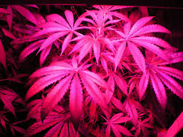 Best Led Grow Lights Best Led Grow Lights Reviews For 2017 Top Rated For The Money