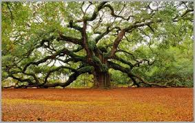 oak tree meaning archives thrive on spiritual magazine