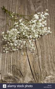 baby s breath flowers bunch of gypsophila baby s breath flowers on wooden table