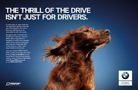 bmw ads bmw ddrive dog basket launched april 1 the inspiration room