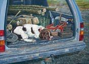 country working u0026 hunting dog greeting cards