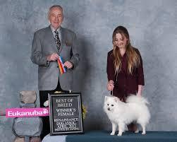 american eskimo dog ontario home