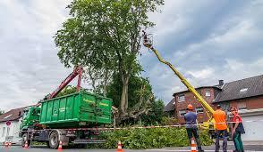 cape cod tree service tree removal service in cape cod ma