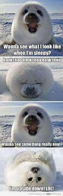 Baby Seal Meme - 92 best animals images on pinterest baby harp seal baby seal and