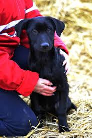 ija u2013 hundehilfe russland