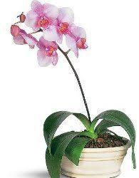 Indoor Flower Plants Best 25 House Plants For Sale Ideas On Pinterest Plant