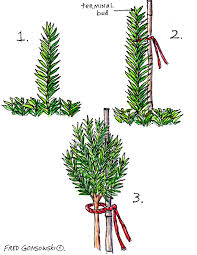 Yew Topiary - grow a topiary from an upright yew fred gonsowski garden home