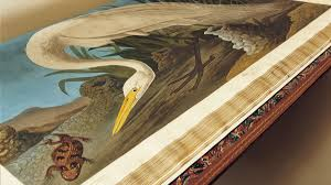 john james audubon u0027s birds of america audubon