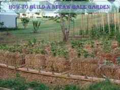 lessons learned in preparing a straw bale garden for summer u0027s