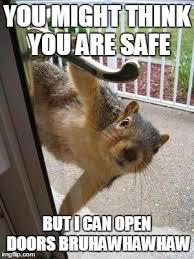 Squirrel Meme - murder squirrel imgflip