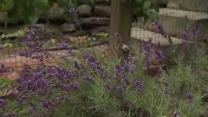 backyard permaculture vegetable garden youtube