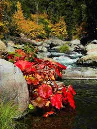 fall colors autumn leaves plumas county northern california