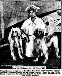 afghan hound breeders victoria afghan hound archives national purebred dog day