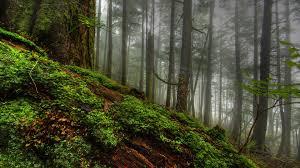 forests lush beautiful slopes fauna colorful nature magic rich