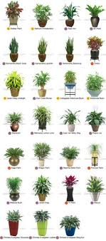 good inside plants 18 of the best indoor house plants to help purify the air detox