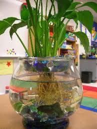Beta Fish In Vase 560 Best Fishtanks Images On Pinterest Aquarium Ideas Fish